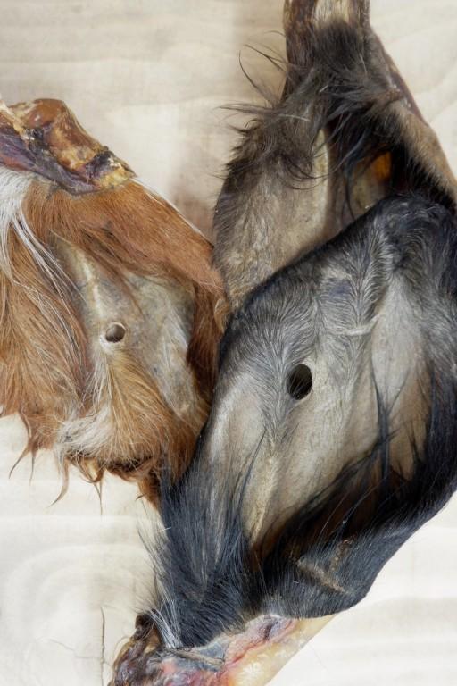 Hairy Cows Ears