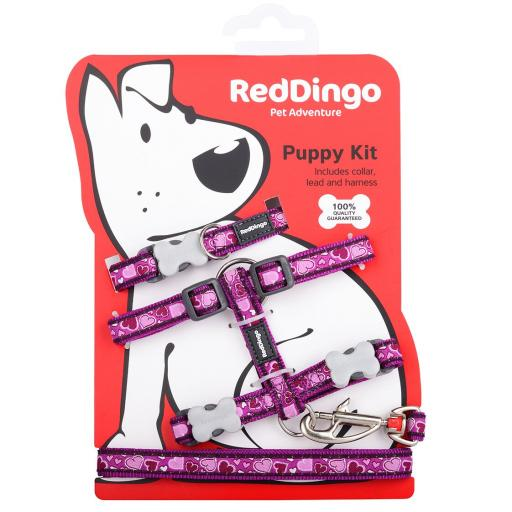Red Dingo Puppy Kit, Breezy Love Purple (Collar, Lead & Harness)