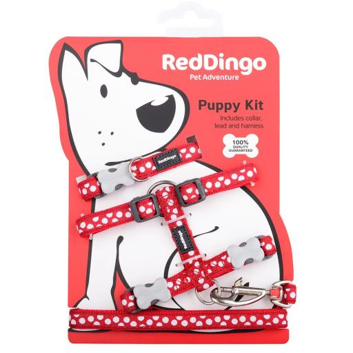 Red Dingo Puppy Kit, Red Spots (Collar, Lead & Harness)
